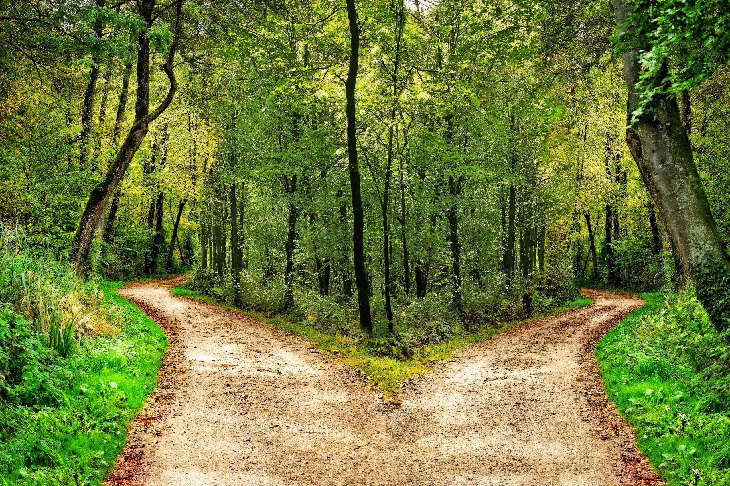 Ein Waldweg teilt sich in zwei verschiedene Richtungen